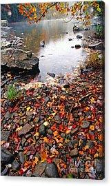 Williams River Monongahela National Forest Acrylic Print by Thomas R Fletcher