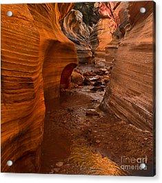 Willis Creek Slot Canyon Acrylic Print by Robert Bales