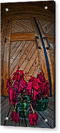 Wilted Acrylic Print by Murray Bloom