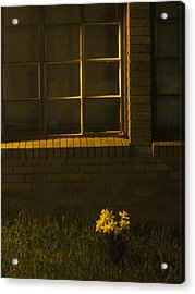Wind And Window Flower Acrylic Print by Guy Ricketts
