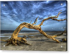 Wind Bent Driftwood Acrylic Print by Greg and Chrystal Mimbs