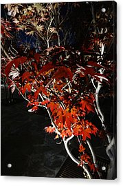 Window Of Sky And Flamed Leaves In My Eye Acrylic Print by Kenneth James