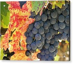 Wine Country Acrylic Print by France  Art