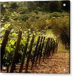 Wine Growing Pouring And Enjoying  Acrylic Print by Christine Burdine
