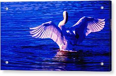 Wing Glow Acrylic Print by Brian Stevens