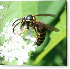Wings And White Flowers Acrylic Print by Stephen Melcher