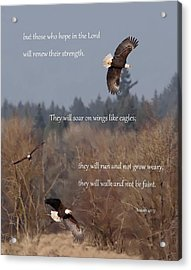 Wings Like Eagles Acrylic Print by Angie Vogel