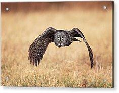 Wings Of Motion Acrylic Print by Daniel Behm