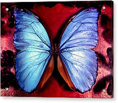 Wings Of Nature Acrylic Print by Karen Wiles