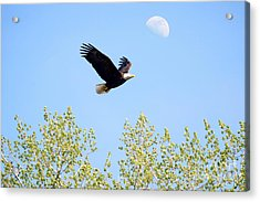 Wings Of The Moon Acrylic Print by Lori Tordsen