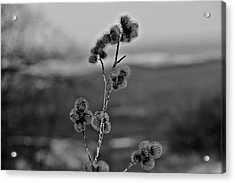 Winter Boogers Acrylic Print by Jahred Allen