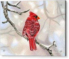 Winter Cardinal Acrylic Print by Sarah Batalka