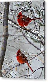 Winter Cardinals Acrylic Print by Susan Leggett