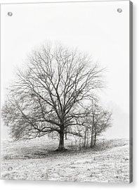 Winter Chrome Acrylic Print by Cris Hayes