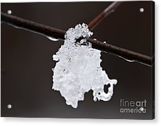 Winter Detail Acrylic Print by Elena Elisseeva