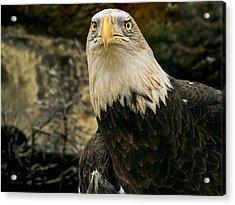 Winter Eagle Acrylic Print by Bob Orsillo