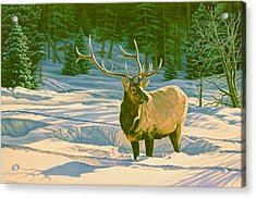 Winter Forage - Elk Acrylic Print by Paul Krapf