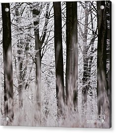 Winter Forest 1 Acrylic Print by Heiko Koehrer-Wagner
