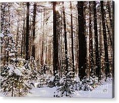 Winter Forest Acrylic Print by Avis  Noelle