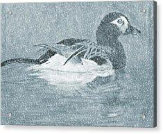 Winter Fowl Acrylic Print by Mosav Art