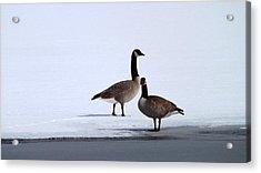 Winter Geese Acrylic Print by Michael Sokalski
