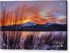 Winter Glow Acrylic Print by Dianne Phelps