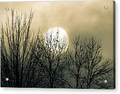 Winter Into Spring Acrylic Print by Bob Orsillo
