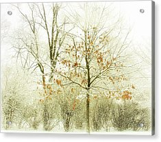 Winter Leaves Acrylic Print by Julie Palencia