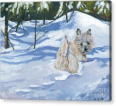 Winter Romp Acrylic Print by Molly Poole