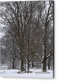 Winter Shadows Acrylic Print by Diane E Berry