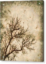 Winter Solitude Acrylic Print by Dan Sproul