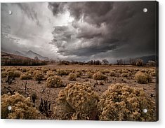 Winter Storm Acrylic Print by Cat Connor