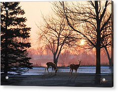 Winter Sunrise Greeting Acrylic Print by Doug Kreuger