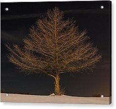 Winter Tree Acrylic Print by Christian Skilbeck