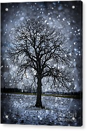 Winter Tree In Snowfall Acrylic Print by Elena Elisseeva