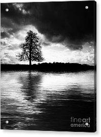 Winter Tree Light   Acrylic Print by Tim Gainey