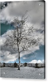 Winter Tree Acrylic Print by Todd Hostetter
