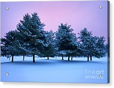 Winter Trees Acrylic Print by Brian Jannsen