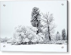 Winter White Acrylic Print by Mike  Dawson
