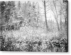 Winter Whites Acrylic Print by Sue OConnor
