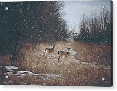 Winter Wonders Acrylic Print by Carrie Ann Grippo-Pike