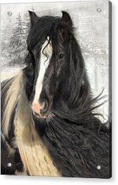 Winter Woolies Acrylic Print by Fran J Scott