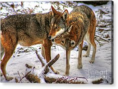 Winter's Warmth Acrylic Print by Steve Ratliff