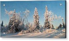 Wintery Acrylic Print by Priska Wettstein