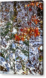 Wintry Mix Acrylic Print by John Haldane