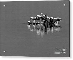 Wisconsin River Acrylic Print by Steven Ralser