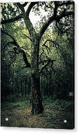 Wise Old Tree Acrylic Print by Robin Lewis