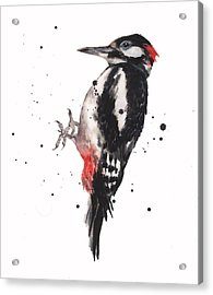 Wise Woody Acrylic Print by Alison Fennell