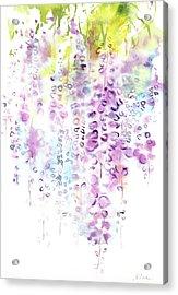 Wisteria Watercolor Version Acrylic Print by Sumiyo Toribe