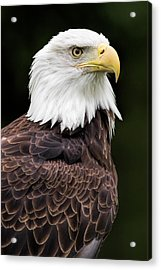 With Dignity Acrylic Print by Dale Kincaid